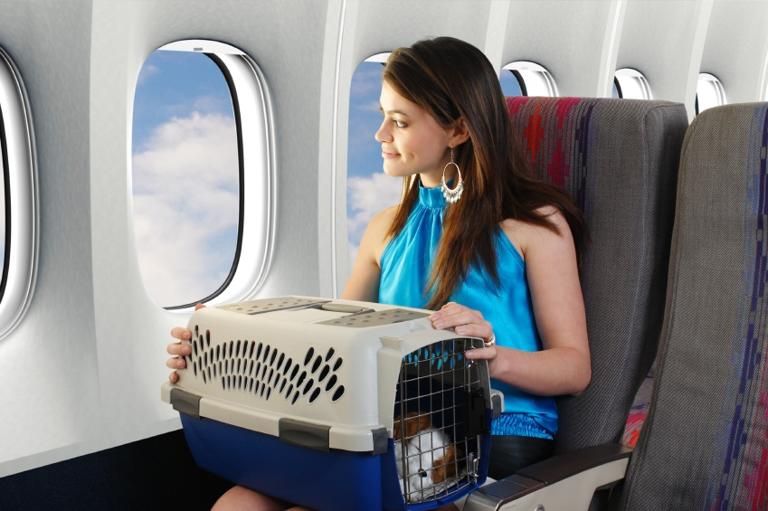 Airline Pet Carriers
