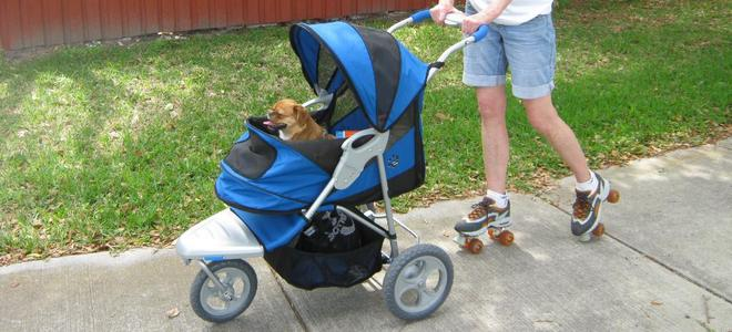 best dog strollers_CogoPet