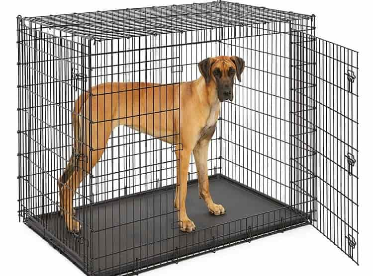 60 inch dog crates