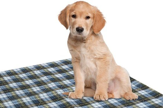 best washable puppy pad 72 x 72