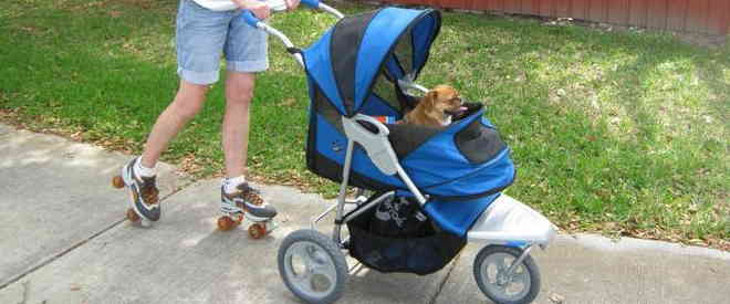 best dog stroller for jogging